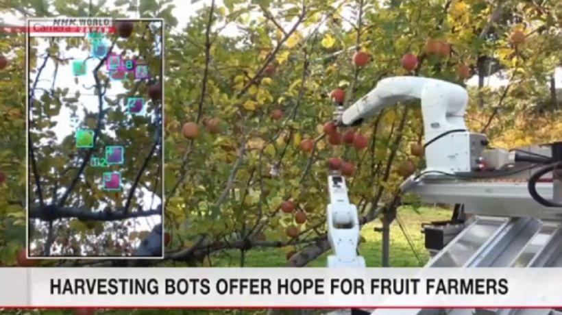 Meyvəyığan robotun məharəti