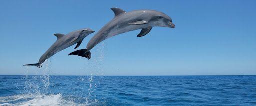 23 iyul Dünya Balinalar və Delfinlər Günü kimi qeyd edilir